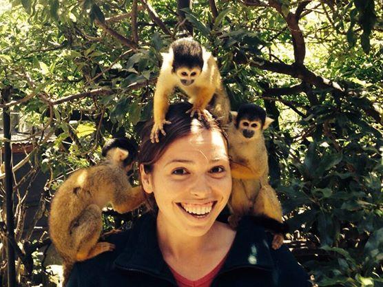 Guatemala Monkeys