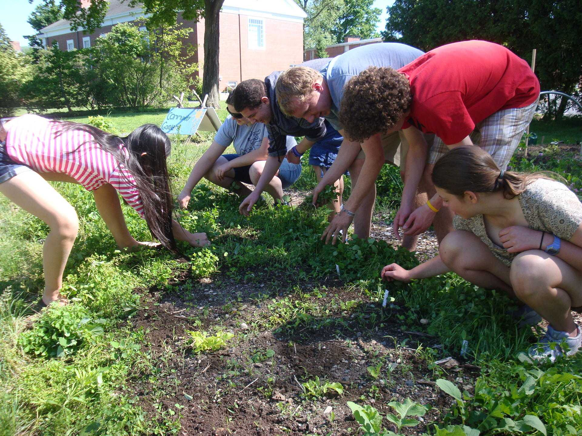Students work to weed out the garden and plant new crops.
