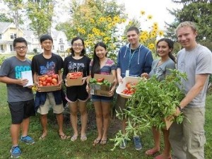 The club collaborates on gathering the harvest!