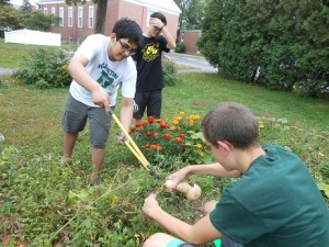 Sustainable Life members, Sam Mahmood, Billy Ashenden, and Eson Law help harvest a winter squash.