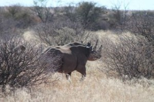 Black Rhino spotted by Hill family in South Africa